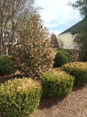 Winter_Damage_Trees_Shrubs