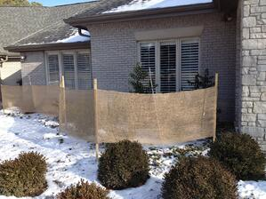 Winter_Damage_Trees_Shrubs_StLouis