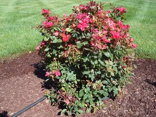 landscaping chesterfield mo