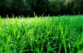 Droplets_of_water_deposited_by_dew_on_the_lawn.jpg