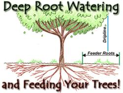 Feeder_Roots_Trees.jpg