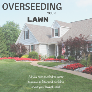 Lawn_Overseeding_101
