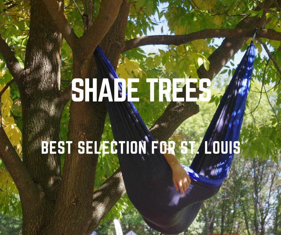 Selecting_a_Shade_Tree_for_Your_St._Louis_Landscaping_1.png
