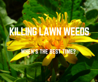 The_Best_Time_to_Kill_Weeds_in_Your_St._Louis_Lawn.png