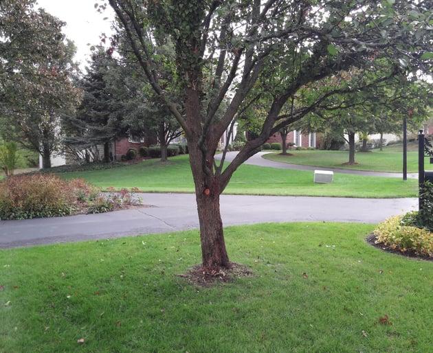 treeafter.jpg
