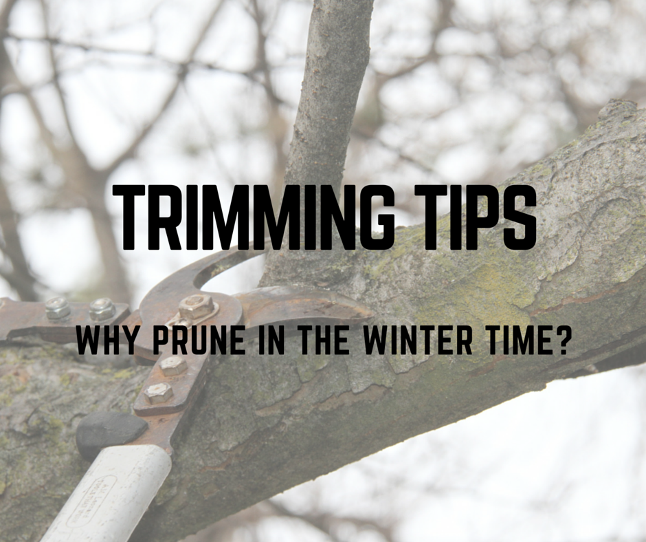 Why_prune_in_the_winter_time.png