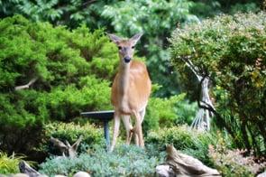 deer-427543_1920