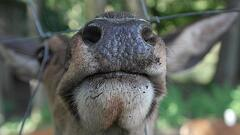 deer_fence