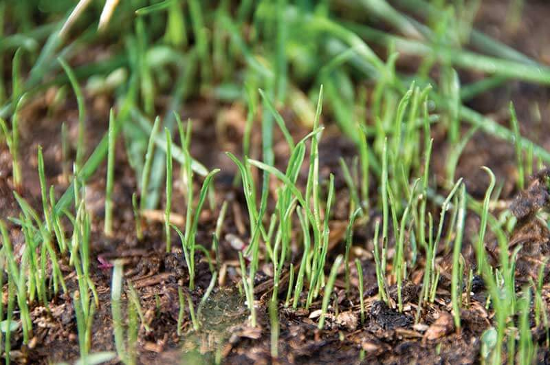 grass seed germination.jpg