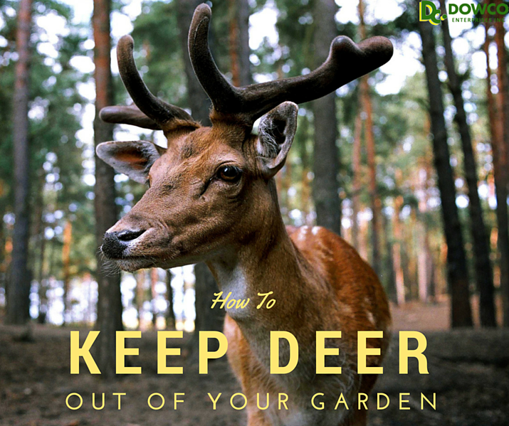 how_to_keep_deer_out_of_your_garden