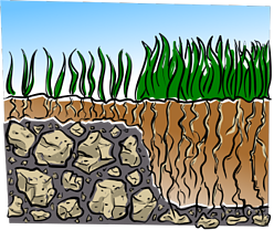 lawn-care-soil-depth-350.png