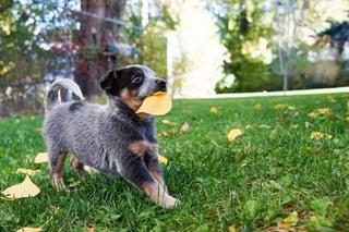 leaf dog.jpg