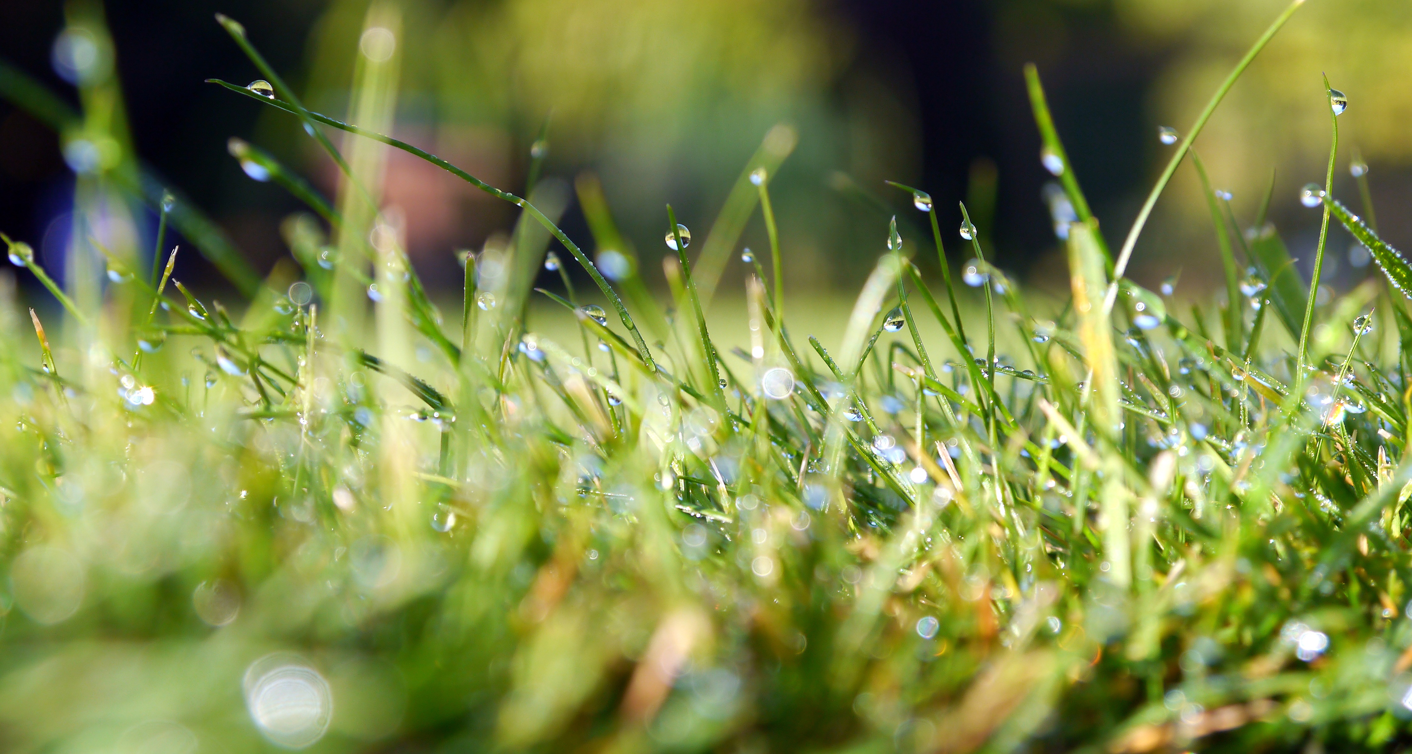 st_louis_lawn_weed_Control_service_grass